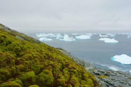 Die Antarktis wird grüner, bleiben Sie wachsam
